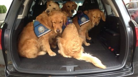 Comfort Dogs Off to New Missions