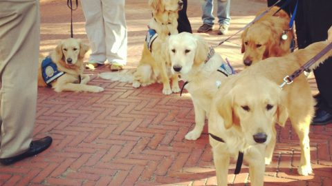 Comfort Dogs Make News – New Stories Added