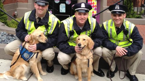Comfort Dogs In Boston!